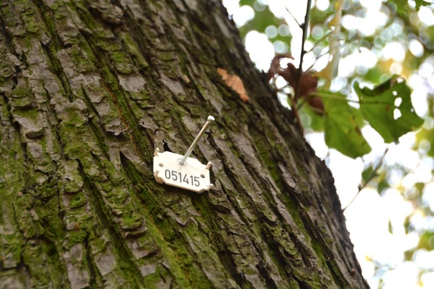 деревья в германии сурамы боюнча табылган сүрөттөр